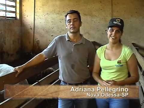 TV do Berro Alimentação dos cordeiros em confinamento Programa 8
