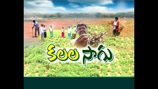 Agriculture Industry at Kadapa | An Youngster's Innovative Idea | Idi Sangathi
