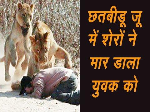 Xxx Mp4 Chhatbir Zoo चिड़ियाघर में शेरों ने युवक को मार डाला रविवार को जू में लायन सफारी में कूद था युवक 3gp Sex