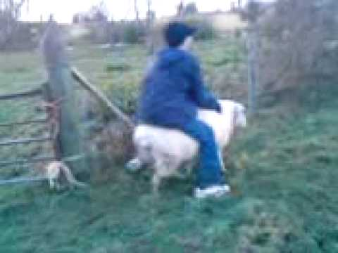 benny riding a sheep