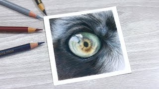 How To Draw a LEMUR EYE with COLORED PENCIL