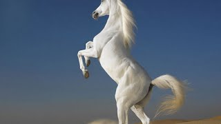 Top 10 Horse Breeds In The World 2016
