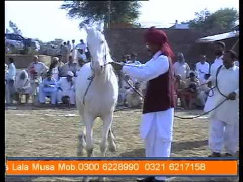 pakistani horse dancing gora dance part2