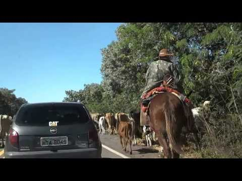 Corumbá MS Capital do Pantanal Comitiva e animais silvestres na BR 262. Venha conhecer