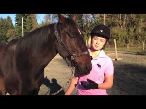 Xxx Mp4 Training A Pushy Horse At Liberty Indys Lesson 3gp Sex