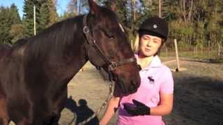 Training a pushy horse at liberty - Indys lesson