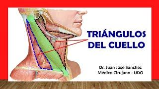 Cuello 1 - Triángulos del Cuello Fácil y Sencillo