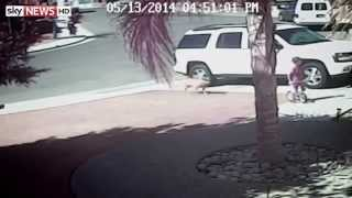 HEROIC CAT SAVES CHILD FROM DOG!