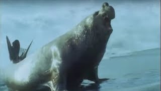 Elephant Seals | Life in the Freezer | BBC