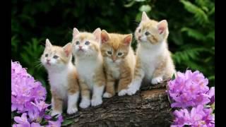 Zdjęcia Kotów.:)