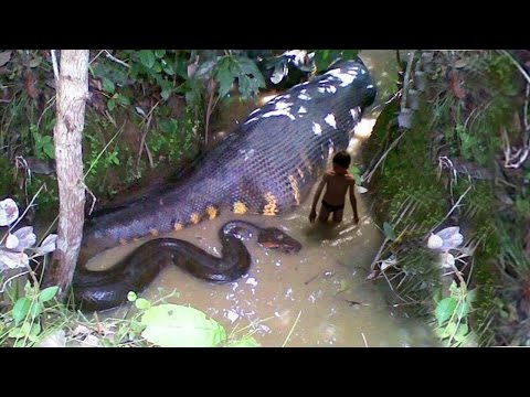 Xxx Mp4 10 Most Dangerous Snake Species In The World 3gp Sex