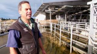 The Hamills - Using technology to care for cows
