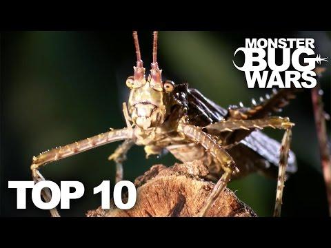 TOP 10 BUG FIGHTS | MONSTER BUG WARS