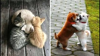 Cute baby animals Videos Compilation cute moment of the animals - Soo Cute! #40