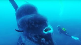 25 Terrifying Sea Creatures That Actually Exist