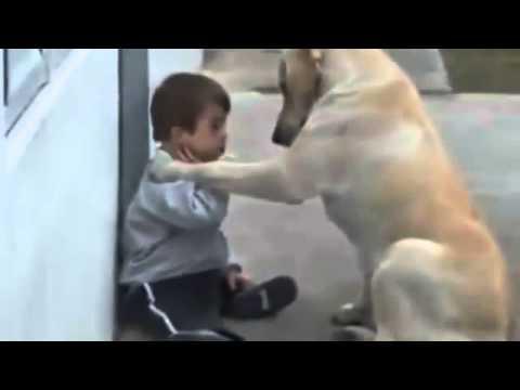 Perro Cuida al Niño Impactante Video De Amor