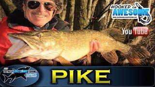 Deadbaiting for Pike in Winter   TAFishing