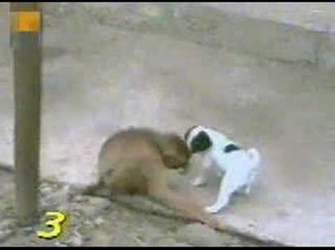 Xxx Mp4 Funny Monkey Dog Sex 3gp Sex