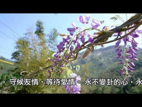 【3014】嘉義瑞里「紫藤花&螢火蟲」美麗傳說