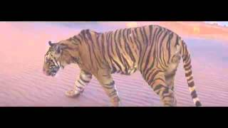 Paranday Full Video   Bilal Saeed   Latest Punjabi Song 2016 Bolly&Lollywood Music PK