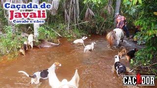 Caçada de Javali com Cavalos e cães