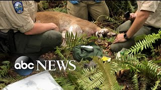 1 man dead, 1 injured after mountain lion attack