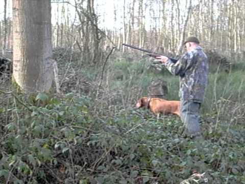 chasse au faisan