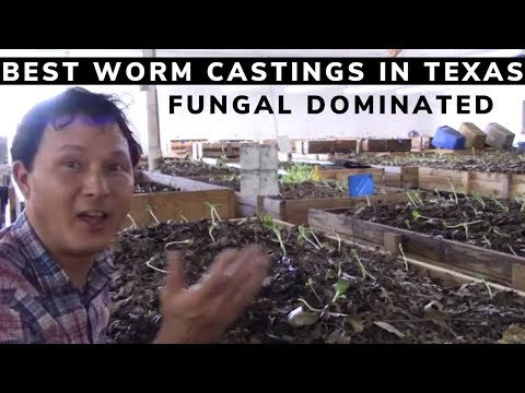 Xxx Mp4 Best Worm Castings I Found In Texas And Maybe The USA 3gp Sex