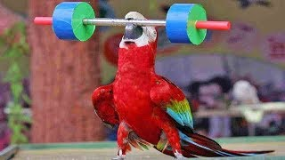Cute Bird Trick  -  Funny Parrot and Bird Videos  - Funny Parrots Compilation 2018