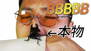 【本物】Beetle Booon But Bean in Bottle(BBBBB) / PIKOTARO(ピコ太郎) -メグ太郎Ver.