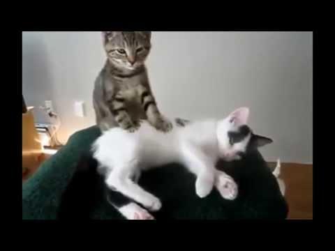 Gatos com palhaçadas épicas 20 Minutos