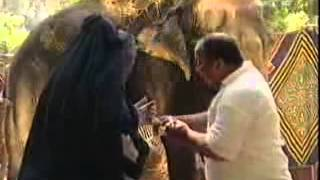 Watch كاميرا خفية ابراهيم نصر   حلقة الفيل حلقة مضحكة جدا