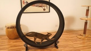 7 Things Your Cat Wants On Amazon