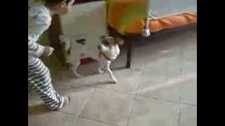 Cane scappa dalla lingua di un bambino