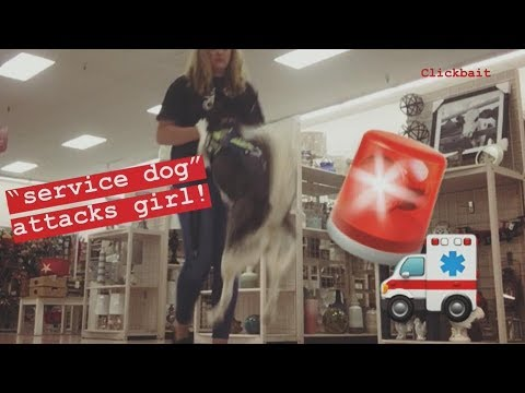Xxx Mp4 Service Dog Attacks Girl Definitely Not Clickbait 😂 3gp Sex