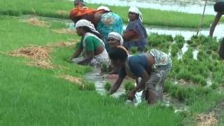 Indian Village Life.First part:South India- Full HD