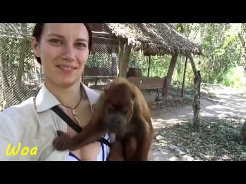 Best comedy videos funny Monkey naughty sexy animals