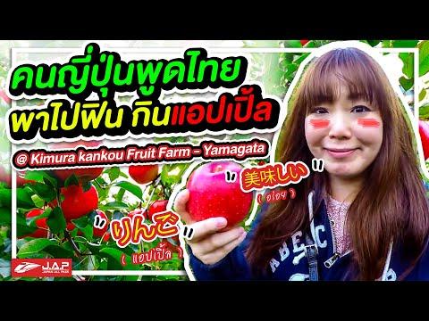 เก็บแอปเปิ้ลญี่ปุ่น ที่ Kimura kankou Fruit Farm Yamagata