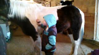Little Girls and Horses: Dreams Do Come True