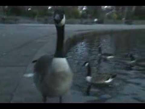 plattfield duck pool