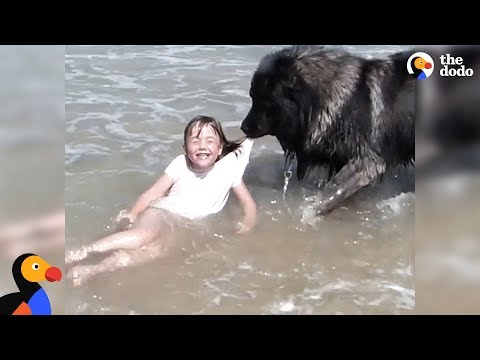 Xxx Mp4 Dog 39 Saves 39 His Little Girl From The Ocean The Dodo 3gp Sex