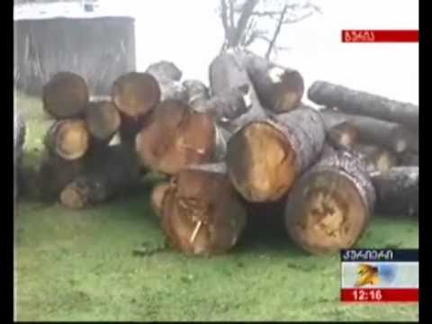 MOE. უკანონო ხე ტყის აღმოჩენა. 19.11.2009