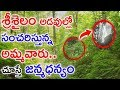 Goddess Bramarambika Devi In Srisailam Forest || Telugu Devotional News Updates || Jilebi