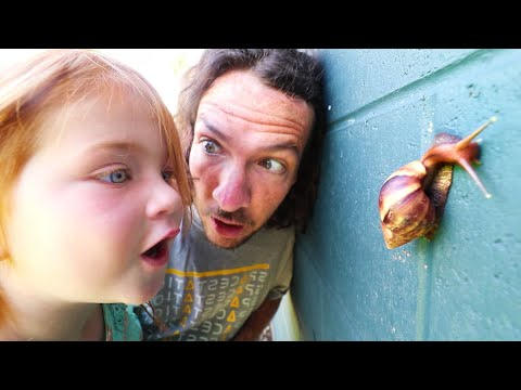 Xxx Mp4 MY PET SNAIL New Morning Routine Catching Bugs With Adley In Hawaii 3gp Sex