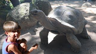 Giant Turtle Feeding - Home Sweet Home !