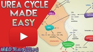 Urea Cycle Made Simple - Biochemistry Video
