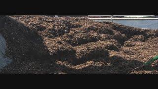 Mayflies Invasion Leaving Massive Mess