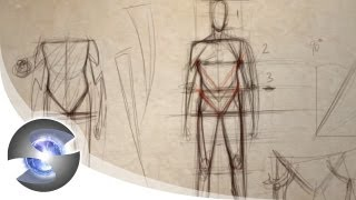 How to Draw the Proportions of the Adult Male