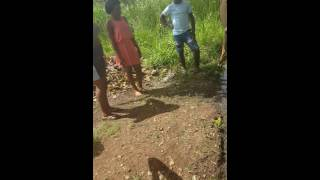 Killing a goat in Jamaica