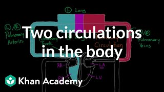Two Circulations in the Body | Circulatory system physiology | NCLEX-RN | Khan Academy